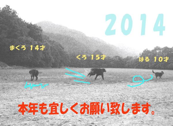 P7021396kuroharumacro_2