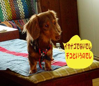 P3301442resizchiko